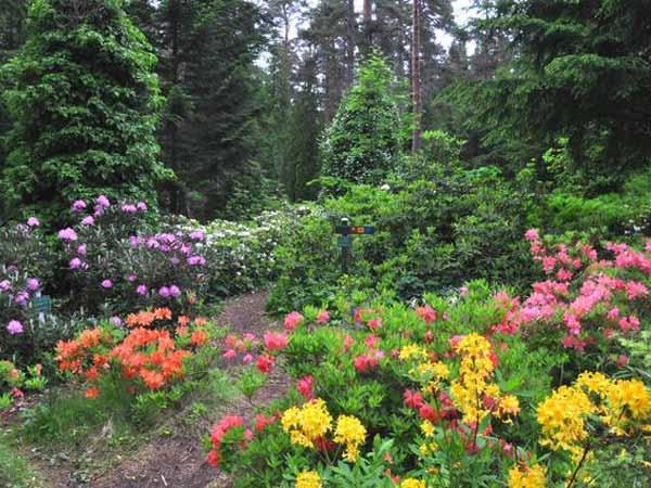 arboretum-mustila
